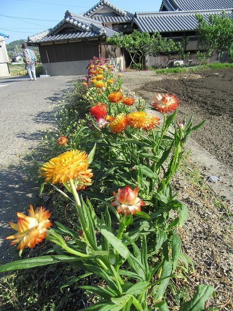 母の花たち 27.5.20