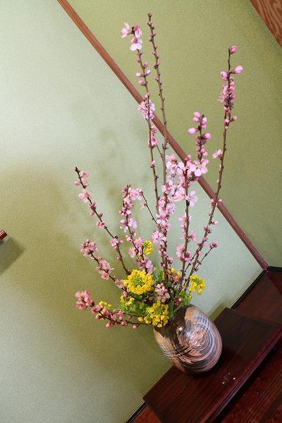 三角邸 桃の花 27.2.28