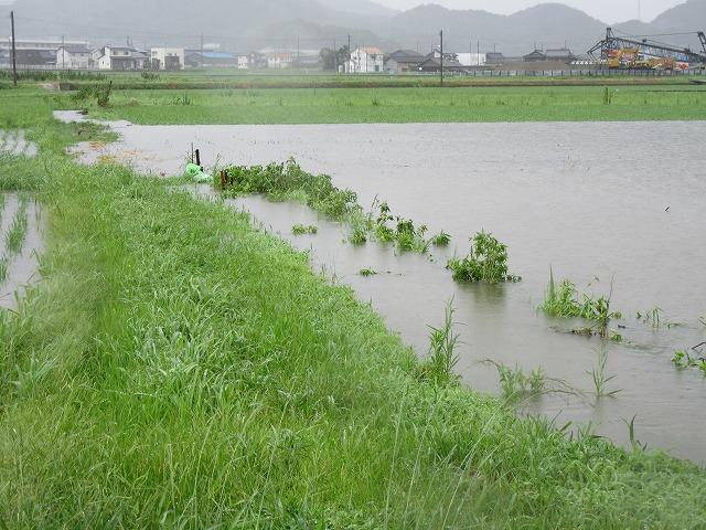 台風11号後の田んぼ 27.7.17