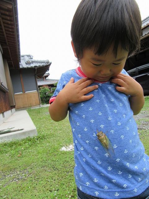 圭のお腹に蝉が 27.7.19