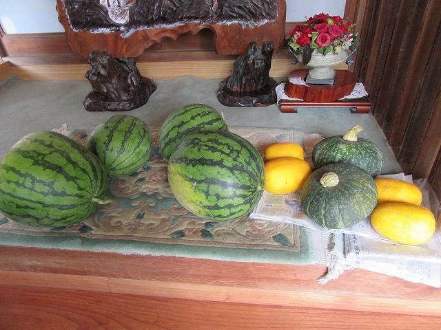 玄関に野菜! 27.7.19