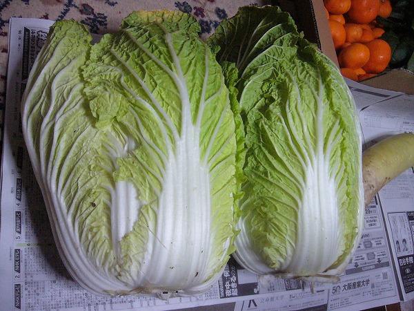 巨大白菜 27.1.5
