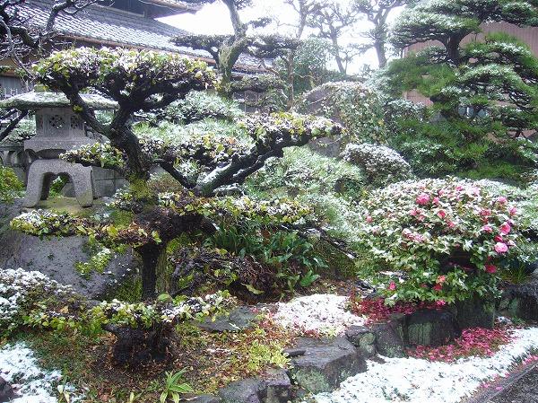 雪降り庭 27.1.30