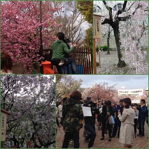 sakura3_convert_20150409230329.jpg