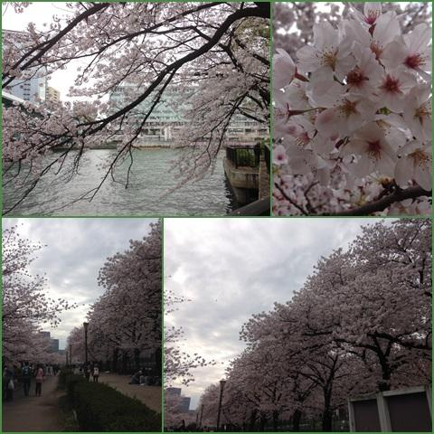 sakura_convert_20150402204656.jpg