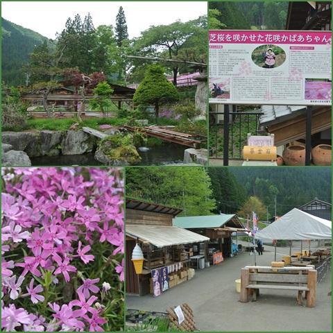 sibazakura_convert_20150512212949.jpg