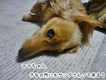 kinako1568.jpg