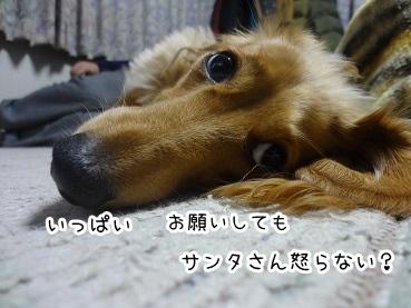kinako1572.jpg