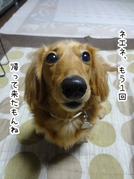 kinako1576.jpg