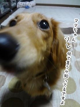 kinako1577.jpg