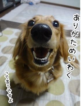 kinako1578.jpg