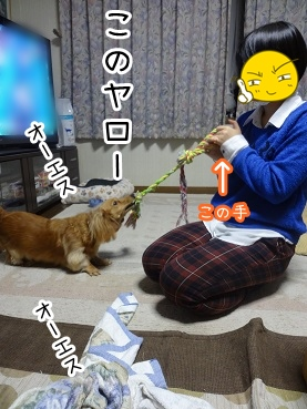 kinako1581.jpg