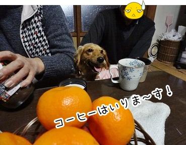 kinako1593.jpg