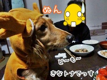 kinako1600.jpg