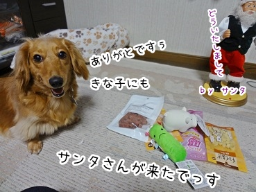kinako1607.jpg