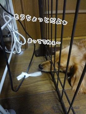 kinako1630.jpg