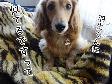 kinako1640.jpg