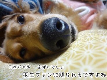 kinako1642.jpg