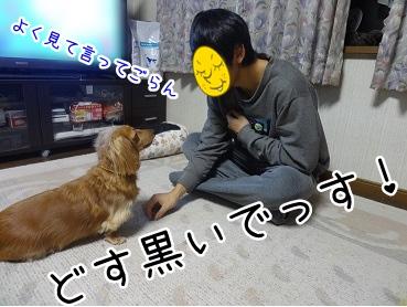 kinako1647.jpg
