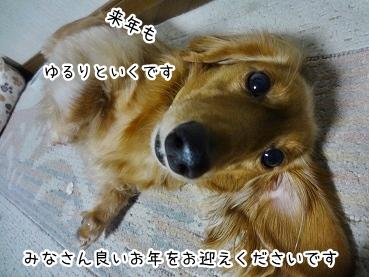 kinako1648.jpg