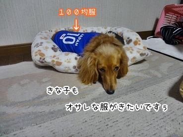 kinako1649.jpg