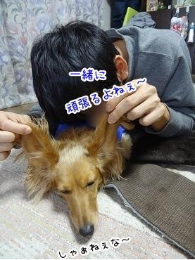 kinako1651.jpg