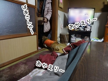 kinako1678.jpg