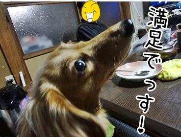 kinako1682.jpg