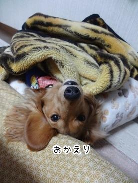 kinako1684.jpg
