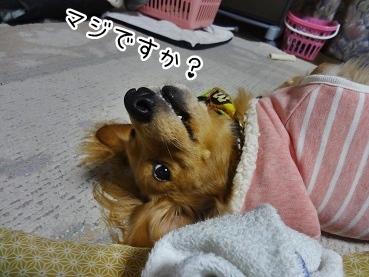 kinako1690.jpg