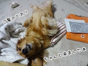 kinako1697.jpg
