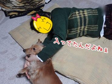 kinako1703.jpg