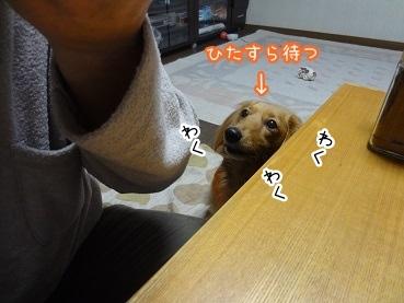 kinako1707.jpg