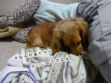 kinako1730.jpg