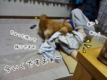 kinako1736.jpg