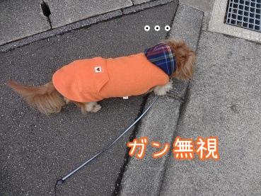 kinako1763.jpg