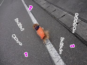 kinako1766.jpg