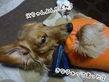 kinako1775.jpg