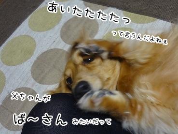 kinako1807.jpg