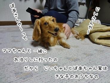 kinako1811.jpg