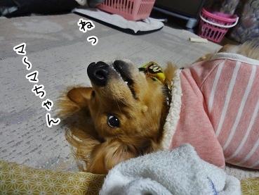 kinako1824.jpg