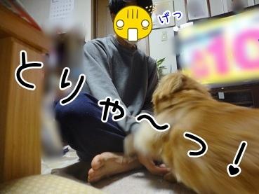 kinako1831.jpg