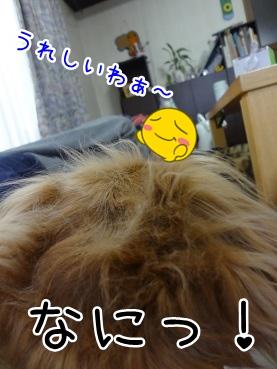 kinako1833.jpg
