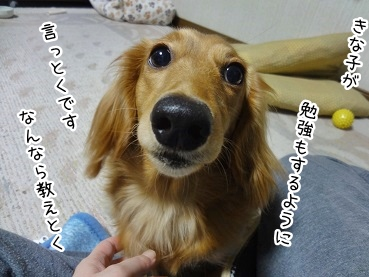 kinako1837.jpg