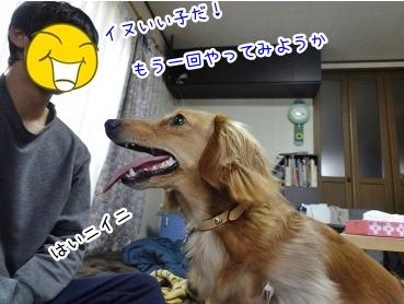 kinako1845.jpg