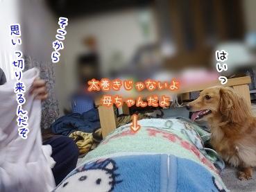 kinako1846.jpg