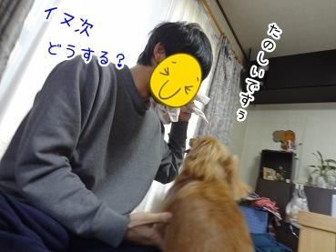 kinako1850.jpg