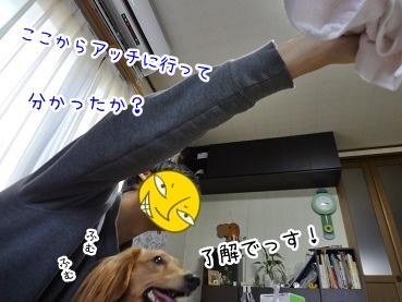kinako1851.jpg