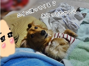 kinako1871.jpg