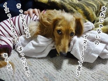 kinako1884.jpg